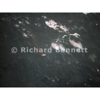 YachtRaces/YR1998/sh98storm/StandAside distress flare 140foot wave